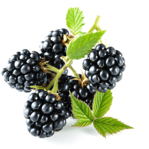 Herbal Vapors | House E-Liquid | Fresh Blackberries